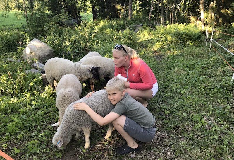 Lapset ja lampaat