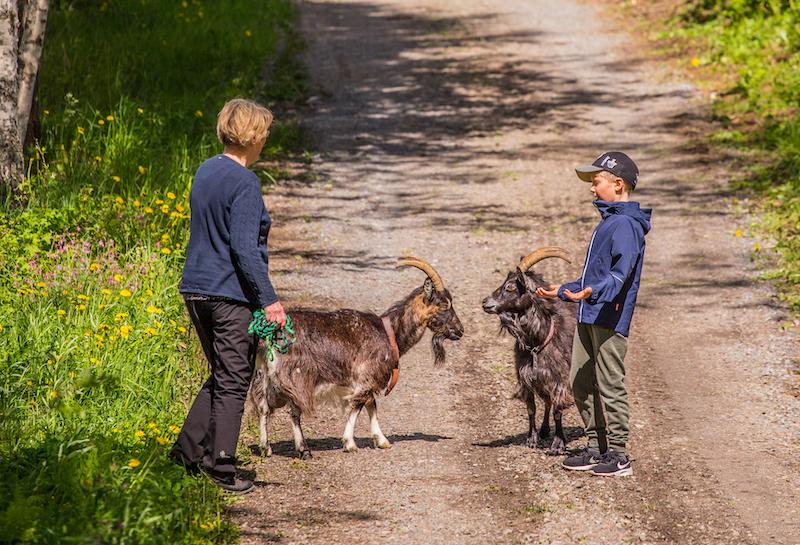 Vuohikävely lapsi